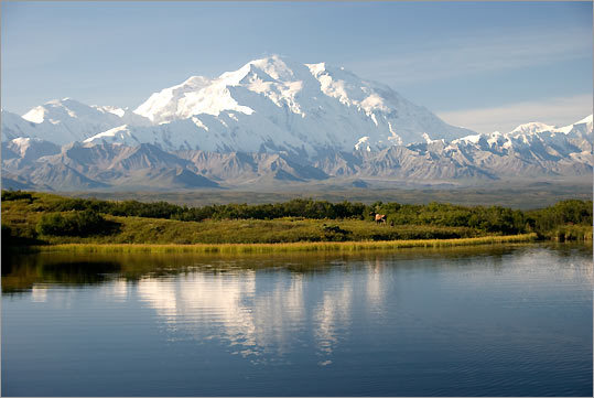 'In 2007, 13 members of our extended family were in Alaska on a family vacation. We were blessed with crystal clear weather and three days of rare perfect views of Mount McKinley . After breakfast several guests took a van ride to Reflection Pond a few miles from the lodge. The view was spectacular, the pond reflecting like a giant mirror. And then, right on cue, two moose, a mother and calf, appeared in the endless brush. They seemed to be unconcerned with the camera clicking tourists and proceeded to wander [within] a hundred feet of us, cross the road, swim across the pond and pause for a brief 'photo op' on the far side of the pond. Suddenly the entire two-week vacation was worth every penny we had saved and spent for this incredible experience.'