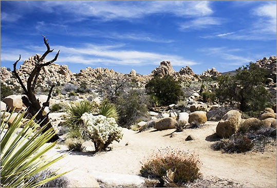 Joshua Tree National Monument 'I'd never seen the splendor of a high altitude desert and the variety of plants caught me by surprise. The distances were so vast I could only imagine how difficult it was for early settlers to cross these arid plains,' Russell said.