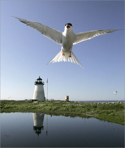 Bird Island served as an ideal locale to help guide ships passing through Marion's Sippican Harbor. An urban legend recalls the 'curse of Bird Island' stemming from the first keeper of the lighthouse murdering his wife in 1819. *Closed to the public
