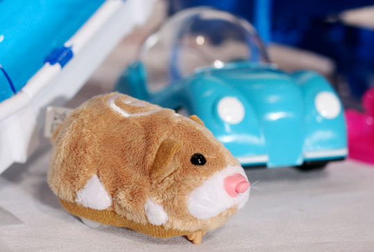 The Zhu Zhu Pets hamster is this holiday season's must-have toy, and is in short supply, following in the footsteps of Cabbage Patch Kids and Tickle Me Elmo.