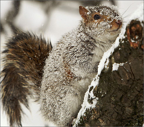 A squirrel ventured out on a tree branch in Lafayette Park, across from the White House in Washington.