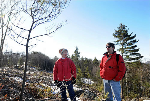 Several trees are all that are left standing in the approximately 2-acre opening. State officials said they have disciplined the state foresters involved in the cut. Hurley and Matera walked among clear cut acres off Woodward Road in Petersham.