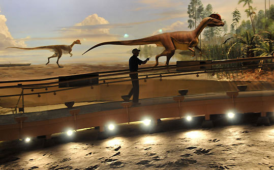 Bill Morlock, of Brattleboro, Vt., points to a model of a dilophosaurus, the dinosaur scientists believe may have made the 200-million-year-old tracks that are on display under the geodesic dome at Dinosaur State Park in Rocky Hill, Conn. Morlock was a guide at the park in the early '70s. This was his first trip back.