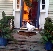 Buddy waits outside on the stoop.