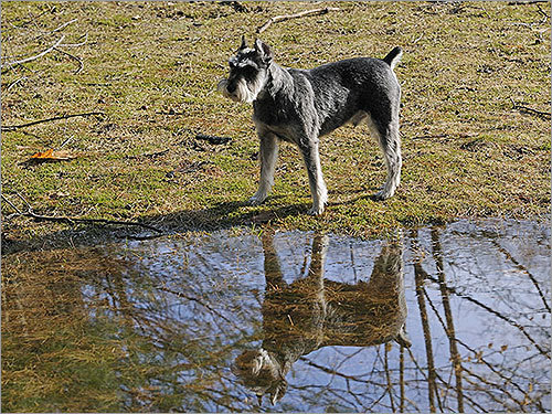 A dog named Josh stood near a giant puddle in his Framingham backyard on Tuesday.