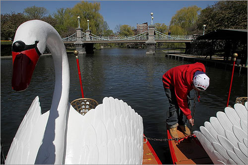They're back. The city's iconic Swan Boats made a splash at the Boston Public Garden today after being reassembled and launched into the lagoon. They will be open to the public Saturday. Scroll through to see the Swan Boats back in action.