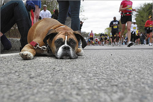 Payton, owned by Randi Potash of Peabody, looked like he just ran a marathon.