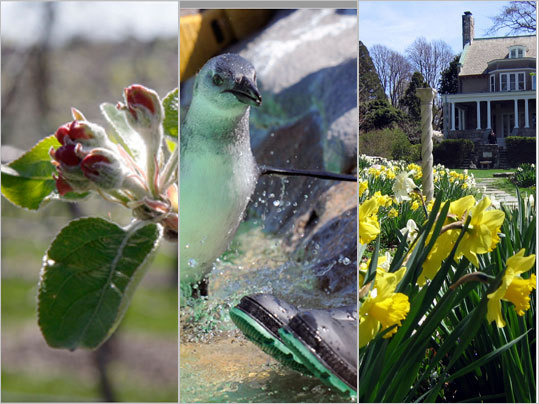 New England organizations are breaking out their shovels for Earth Day and inviting you to leave your green mark with a variety of activities aimed at promoting the well-being of our planet.