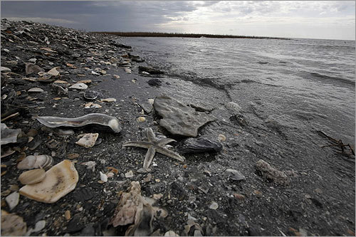 The disaster threatened hundreds of miles of fragile and environmentally rich coastline along the Gulf that is home to a large variety of wildlife and vegetation. A starfish washed ashore at the Chandeleur Islands, located off the southeastern coast of Louisiana.