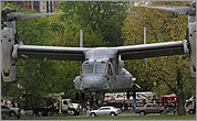 Osprey lands on Boston Common