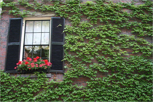 Flowers in a Beacon Hill window box stand out from the ivy-covered brick walls. Shifting the colorful window box to the left side of the composition lends a greater contrast with the wall.