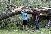 Trees toppled by the storm over the weekend on the Esplanade