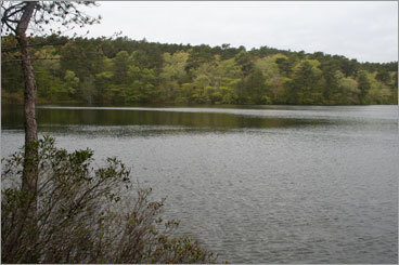 DYER POND, WELLFLEET A 15-minute walk northwest of the Great Pond parking lot on Cahoon Hallow Road, skirting Turtle Pond to your right, brings you to this gem. Walk on the fallen pine needles to the water's edge and it feels like a remote mountain lake in Vermont, not a pond just down the road from the après-beach scene at The Beachcomber bar. Go here in the shoulder season months to have it all to yourself. About 10 miles east of the rotary on Route 6, turn right on Cahoon Hallow Road. The Great Pond parking lot (resident sticker required) is on the left. Bike up from the beach.