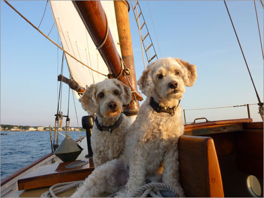 Dylan and Toby sailing off West Chop, Tisbury on Martha's Vineyard.
