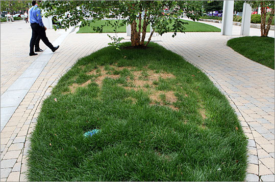 A yellowing island of grass on a section of the Rose Fitzgerald Kennedy Greenway, from last July.