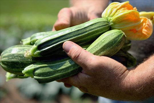 Vermont State Zucchini Festival
