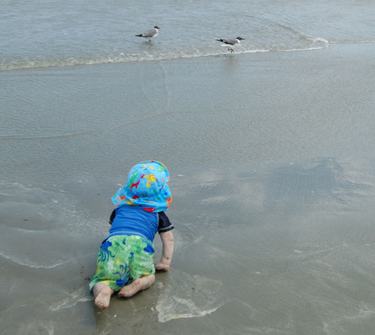 The author's nephew shows no fear of being gulled by these sharp-eyed natives on the beach at Kiawah Beachwalker Park.