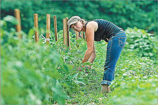 Rachael Potts worked on her crops behind Richardson's Dairy Farm in Dracut.