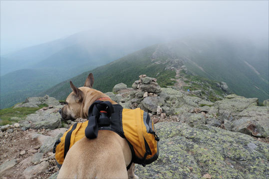 Maddie leads the way across the Franconia Ridge Trail on Mt. Lafayette in New Hampshire.