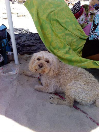 Frankie finds a nice shaded area to cool off while hanging out on the beach.