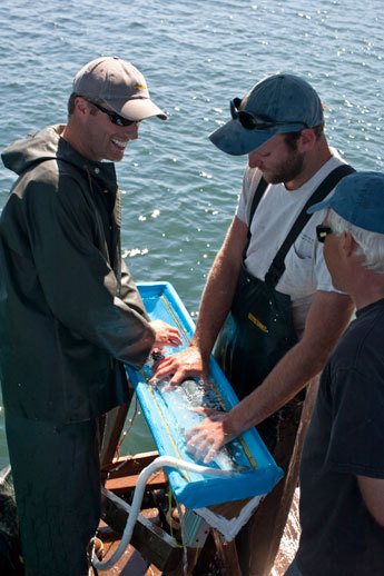 Fisheries biologist Jason Smith (left), tagging a sockeye salmon that will work its way up to the Fraser River.