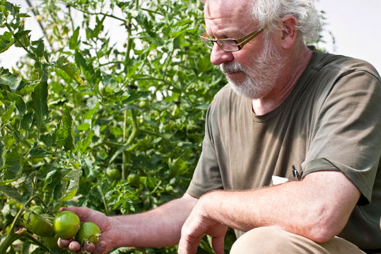 Starks inspects tomatoes in a greenhouse. Between the salmon fishing he does, the prawns and lamb he buys from neighbors, and the farm he and Olsen run, they can supply up to 85 percent of what they use in the kitchen.
