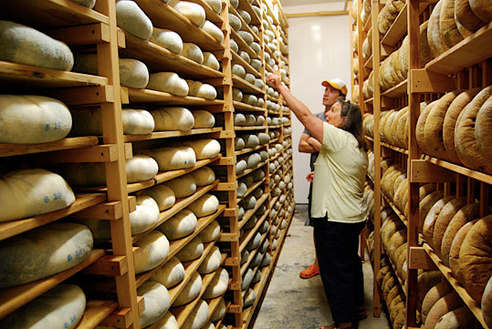 Donna Pacheco, Achadinha's head cheesemaker, in the aging room of goat cheese wheels.
