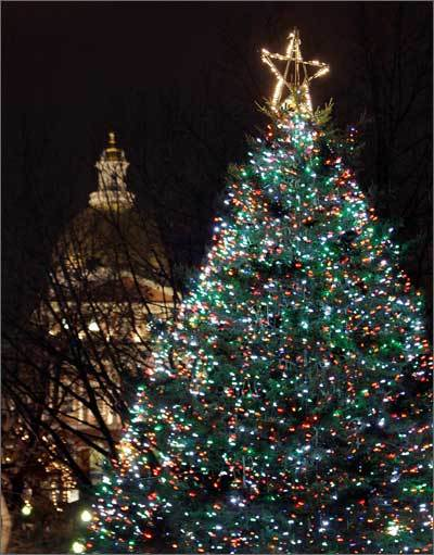 2008 The tree glows shortly after its seasonal lighting in 2008.