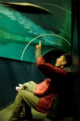Polaria in the city of Tromso has an Arctic aquarium with bearded seals, a panoramic theater, and exhibits on the Arctic's flora, fauna, climate, and environment. Visitors can sit in a tunnel beneath the aquarium and watch the seals swim past overhead.