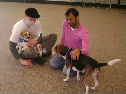 Inghram (left) works from home and has two beagles named Bently and Gracie (purple harness) that were adopted from animal shelters in Rhode Island. He said he thought his home would be a good home for Dino because of his experience with Gracie, who has had both rear knees reconstructed.