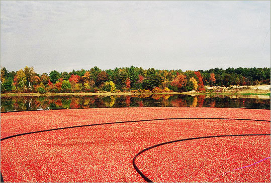 Hanson Irish population: 40.8% This South Shore town has almost 10,000 residents. At left, the harvest of a Hanson bog owned by Kravitz Cranberries. Margin of error: +/-12.3%