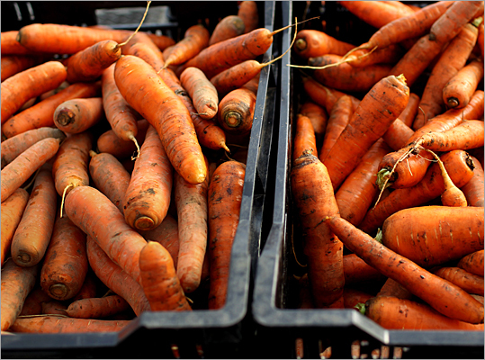 Tesco whistling carrots