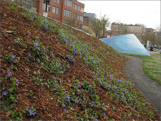 The other side is Earth and woodchips, planted with flowers.