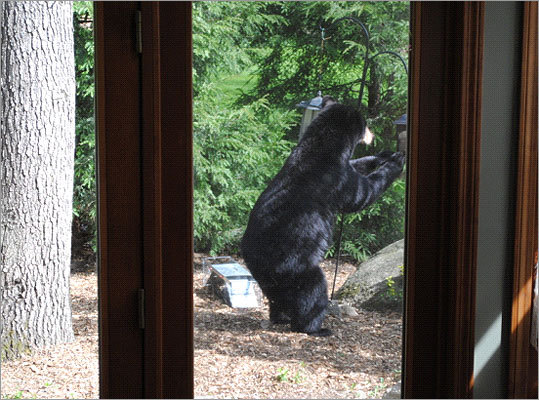 Police have distributed door tags asking residents to bring bird feeders inside, and are asking people to call if they see a bear.