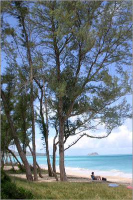 7. Waimanalo Bay Oahu, Hawaii 'This park has ample parking, restrooms, outdoor showers, and a good beach for swimming,' Leatherman said. 'While not as stunning as some other Hawaiian beaches, it is a safe beach because big waves and dangerous currents are rare and lifeguards are present. Hawaiians who live on Oahu frequent this beach.'
