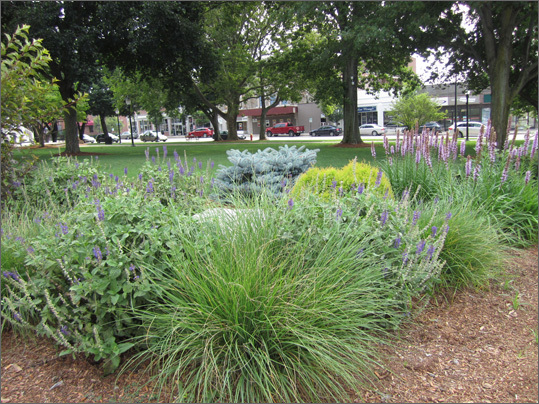 Club member Debbie Winthrop manages the garden at the corner of Washington and Cottage streets in the Town Common. Lane said she designs gardens keeping in mind color, texture, and height.