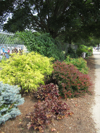 The 234-foot stretch of gardens along the fence in front of Hawes Pool Park was completed in 2006. It cost about $5,000 to complete with funds provided by the Andrew Boch Betterment Fund, Dedham Savings Bank, and a South Norwood businessman.
