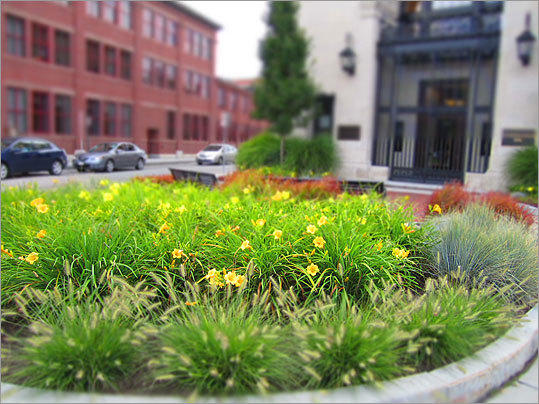 As fall looms ahead in the not-so-distant future, Watertown residents have another few weeks to enjoy the gardens, vegetation and flowers planted around Watertown. Here are the best places to find hidden gardens. The Watertown Savings Bank (left) placed potted yellow daylilies in front of their building in Watertown Square.