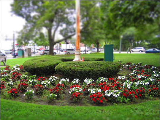 Red and white flowers surround the base of the flagpole in Watertown Square.