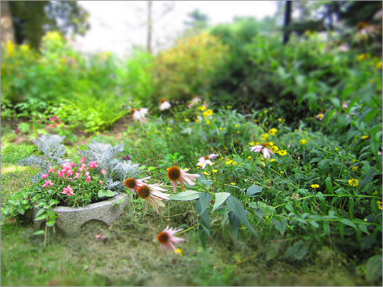 In a garden near the school's pond, potted plants and grounded flowers alike bend toward the sun's rays.