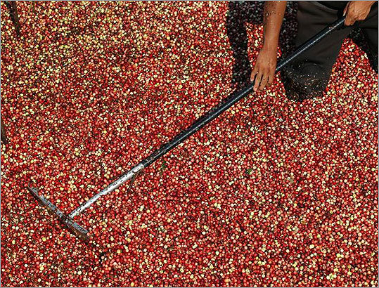 "Cranberries are being used in new ways -- dried and sweetened cranberries have become popular as snacks and in salads, and there is the emerging ""nutraceutical"" market that is based solely around the health benefits of the fruit, which can used to make vitamins and other nutritional supplements."
