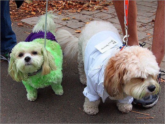 Taking on two sides of a split personality, Summer, at left, came to the parade as the Incredible Hulk, while her fiance Duke dressed as the Hulk's mild-mannered alter ego, Dr. Bruce Banner. The costumes were dreamed up by Rose Mitchell, a South End dog walker who lives with Summer and looks after Duke.