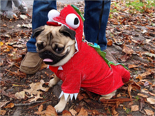 Charlie the pug came dressed as a dragon and was accompanied by owners Mark Liszewski and Ji Won Kim, who live in Attleboro.