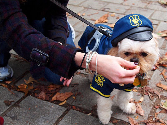 Back Bay resident Rosie Gaskin offered a treat to Rocky, her Shih Tzu lawman.