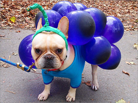 South End resident Justin Mills won the best individual costume prize for dressing his French bulldog, Mr. Pork Chops, as a bunch of grapes.