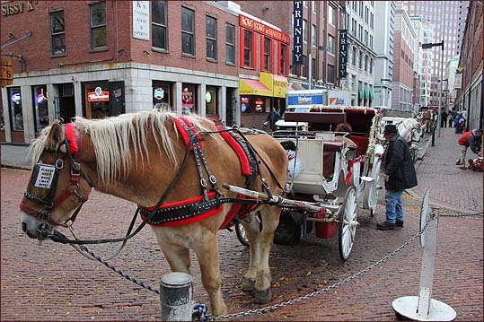 Horses and carriages were lined up around the block waiting for patrons to hop in.