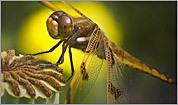 MassAudubon: Best nature photography