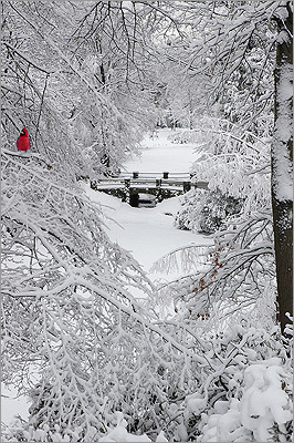 Medford photographer George McLean is a frequent visitor to Mount Auburn Cemetery. Here are some of his photos over the years. Left: Mount Auburn in the winter.