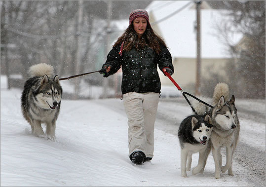 Addie Cleary walked her Siberian Huskies Coda (left), Yana, and Nanook through the snow on Langsford St. in the Lanesville section of Gloucester, Mass.