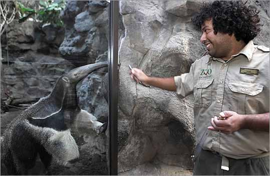 "In honor of Presidents' Day and this year's presidential election, Franklin Park Zoo is hosting its own animal election next week to vote in a new ""president"" of the zoo, officials said. From Monday through Friday, those who visit the zoo between 11 a.m. and 3 p.m. can learn about each of the six candidates' ""platforms,"" discover what makes each animal unique, vote for their favorite at ballot boxes located in the zoo's Tropical Forest section, and commemorate the democratic process with games and activities."